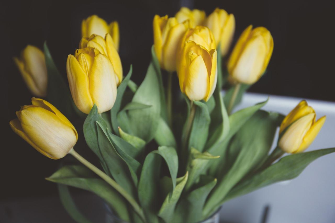 Sonoma Flower Market – 2.0