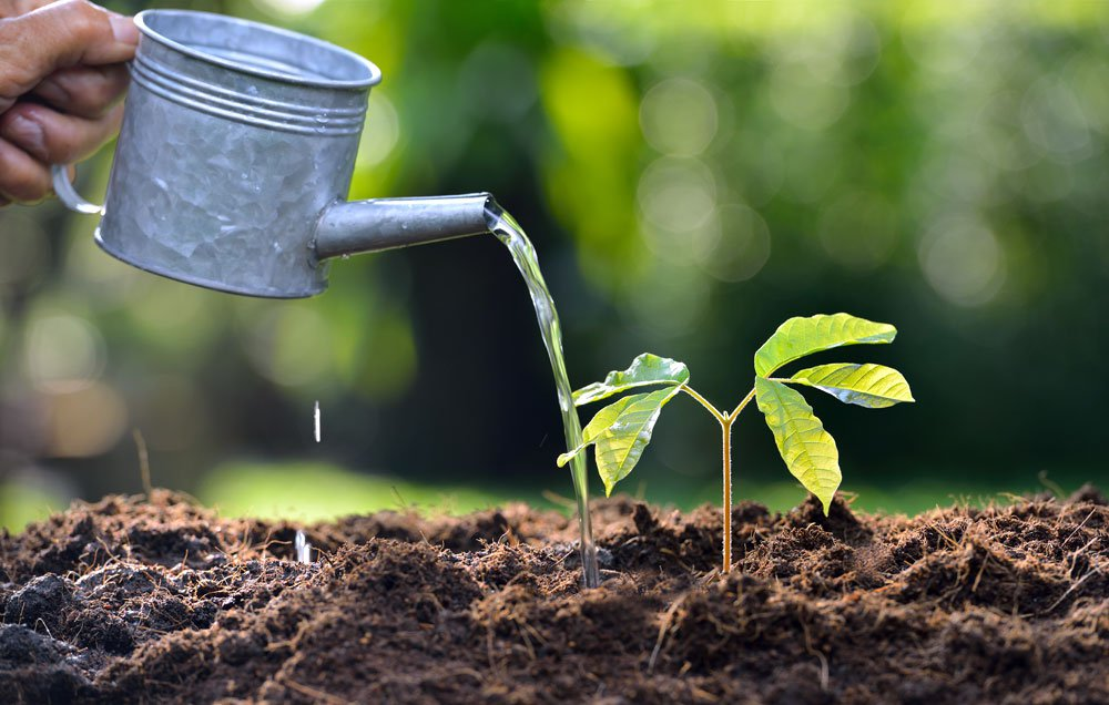 How To Take Care Of Your Garden In The Heat