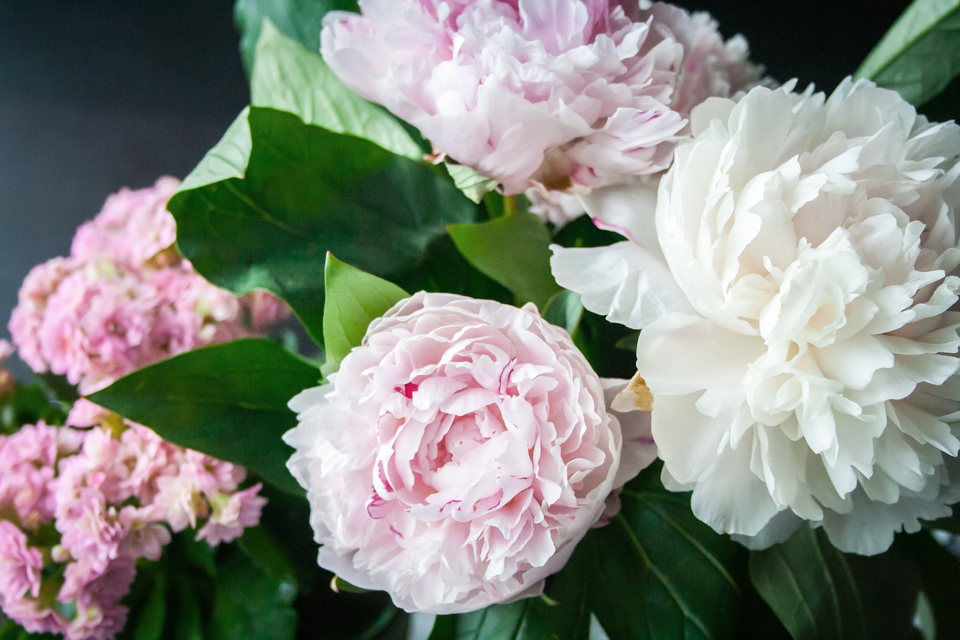 Planting a Field of Peonies