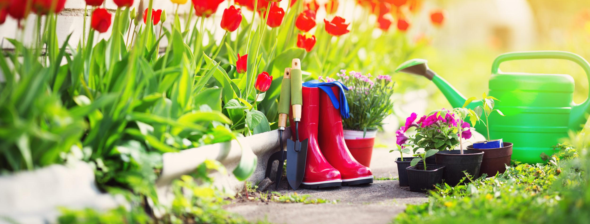 How to Start a Garden: Part 1