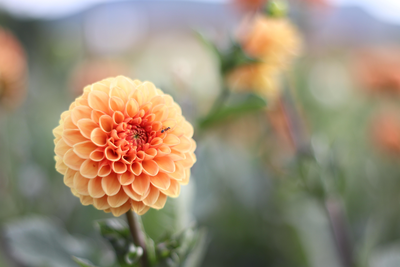 Summer Flower Care
