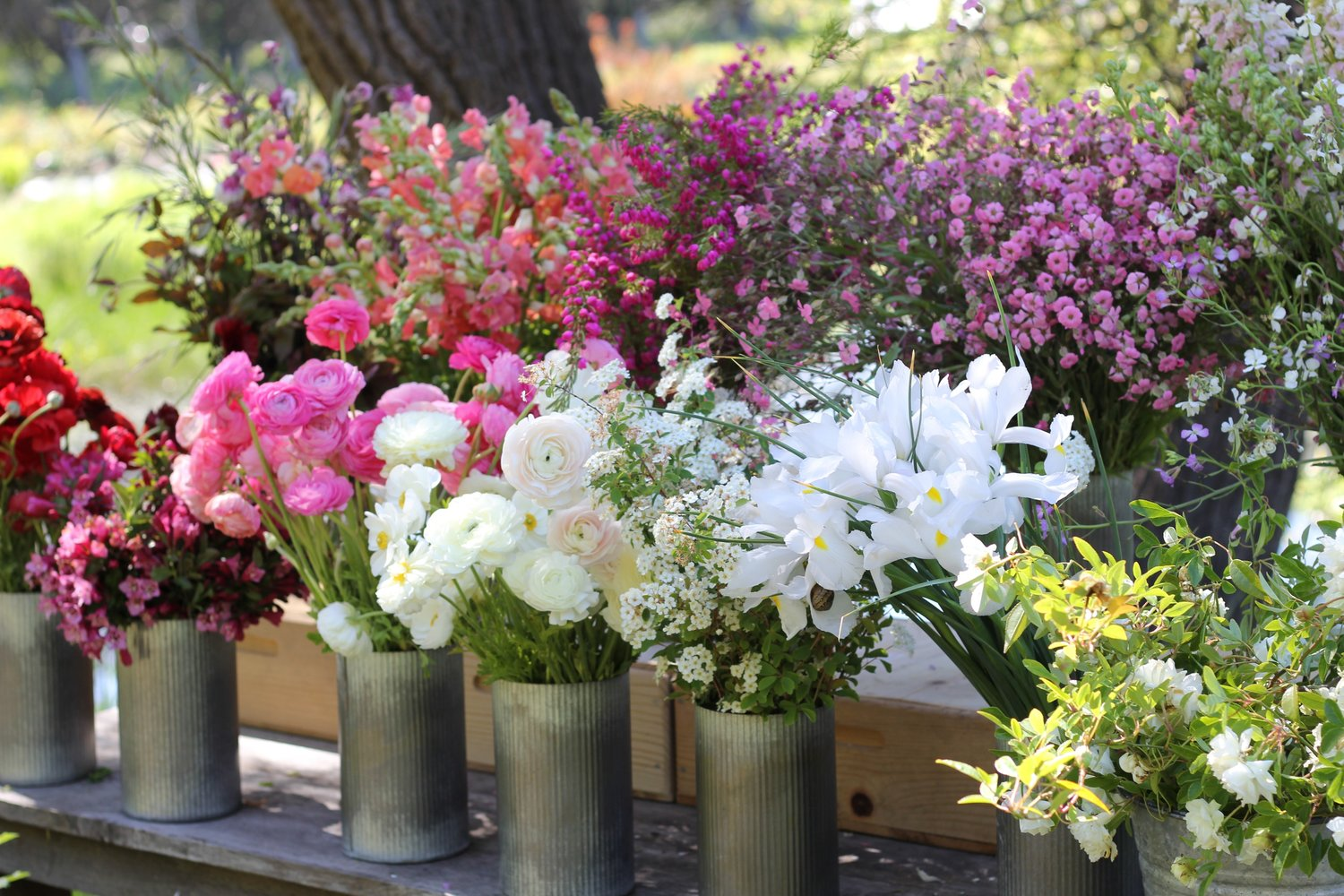 How to Grow Bouquets All Summer