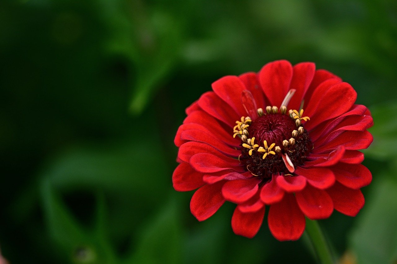 Flowers to Plant in July