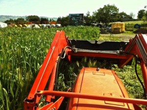 Turning cover crops back into the soil