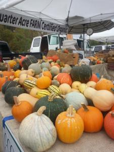 when-to-harvest-winter-squash-pumpkins-gourd