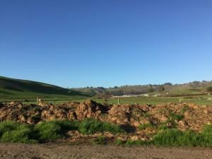 First Light Farm in Petaluma