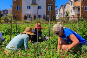 Gardening Resolutions 2015