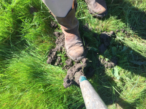 Muddy soil sticking to a shovel, which means it's still too wet to plant!