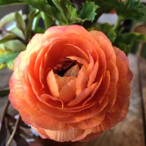 seeds-to-sow-in-spring-grab-n-grow