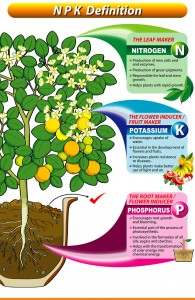 Click photo to enlarge. Photo Source: Great Garden Supply