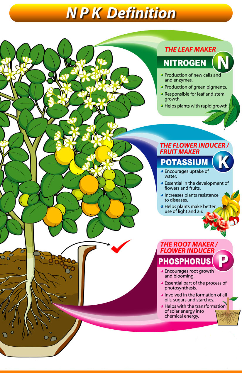 Understanding npk fertilizers grab n 39 grow for What do you mean by soil