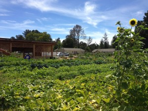 Permaculture Skills Center on a beautiful day