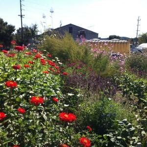 Grab N' Grow Late Summer Garden Care