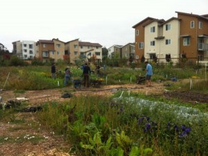 Summer Garden Care and Clean Up
