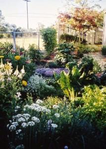 Wendy Krupnick's Home Garden