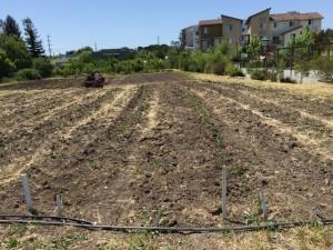 Planning Crop Rotations