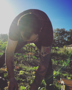 Chef Matt Elias harvesting salad greens at Petaluma Bounty