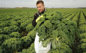 A farmer bringing in a large harvest of kale.
