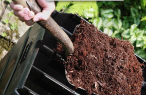 Use plenty of compost to amend your soil prior to transplanting your kale starts.