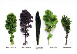When you decide to grow kale, you have lots of choices - photo source Buzzfeed.com