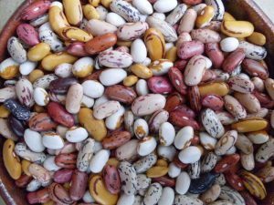 Harvest dry bean varieties