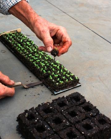 seed blocker