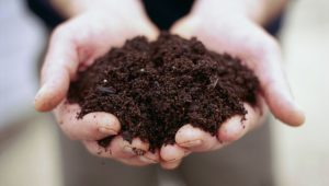 composting in the fall