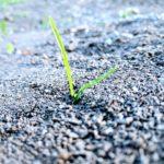 grass-2406908_640