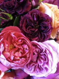 Garden Roses-1