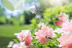 watering-2389940_640